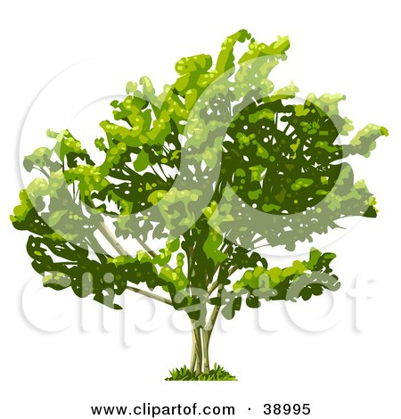 Clipart Illustration of a Wide Tree With Thick Foliage by Tonis Pan