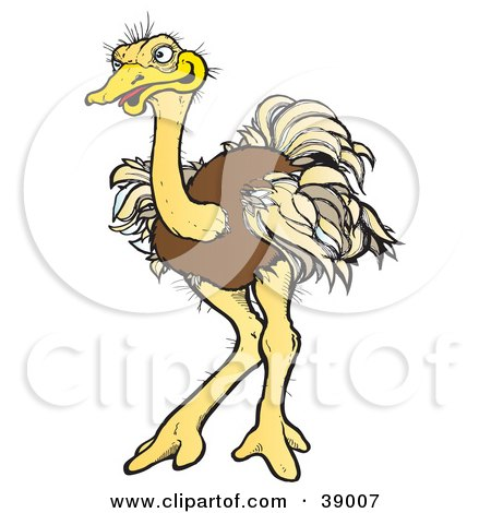 Brown Ostrich Bird With Ruffled Feathers Posters, Art Prints