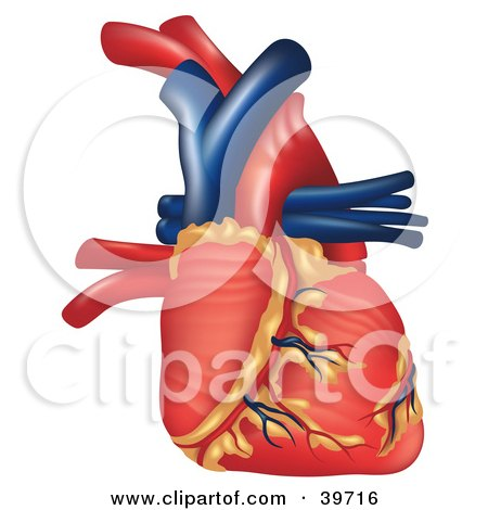 Clipart Illustration of a 3d Human Heart With Vessels by dero