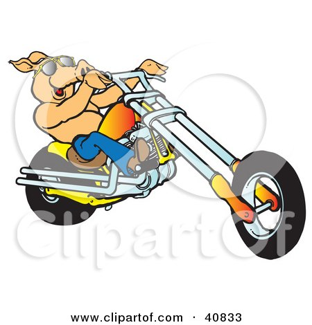 Clipart Illustration of a Happy Shirtless Pig In Sunglasses, Riding An Orange Chopper by Snowy