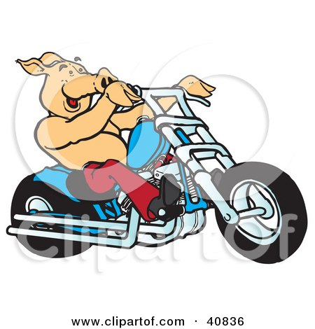 Happy Pig Riding A Red Chopper Posters, Art Prints