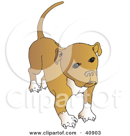 Clipart Illustration of a Cute Brown And White Pitbull With A Full Tail by Snowy