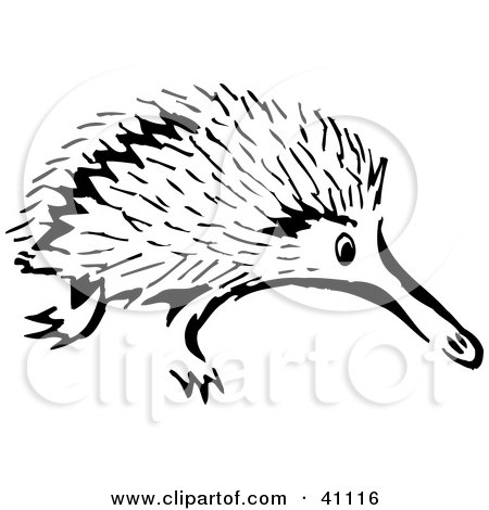 Clipart Illustration of a Black And White Sketch Of An Echidna by Dennis Holmes Designs