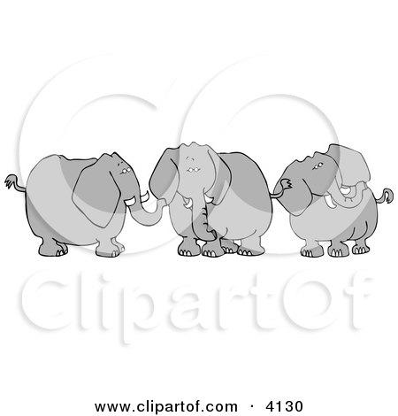 Three Elephants with Tusks Posters, Art Prints