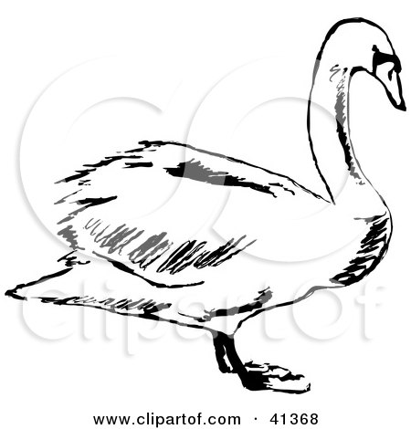 Clipart Illustration of a Black And White Profile Sketch Of A Swan by Prawny