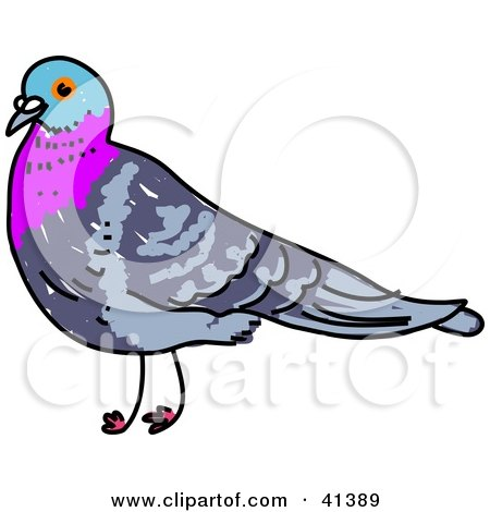 Clipart Illustration of a Pigeon With A Blue And Purple Head And Neck by Prawny