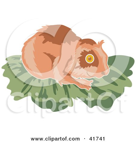 Clipart Illustration of a Brown Hamster on Green by Prawny