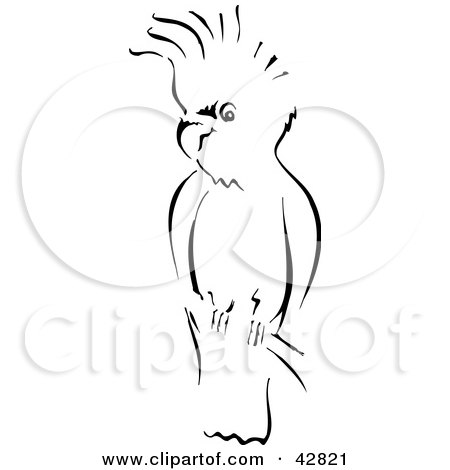 Cockatoo Drawing Sketch of a Cockatoo Bird