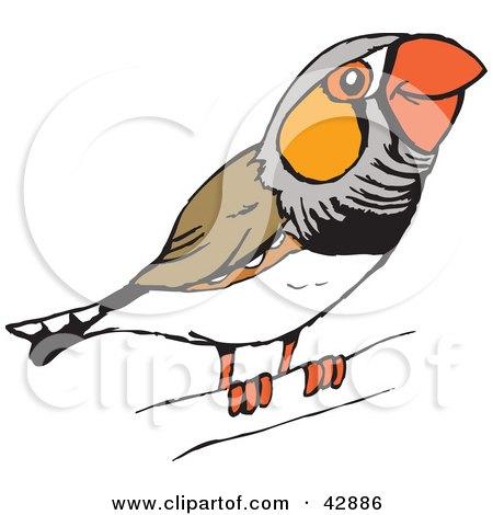 Royalty-Free (RF) Zebra Finch Clipart, Illustrations ...