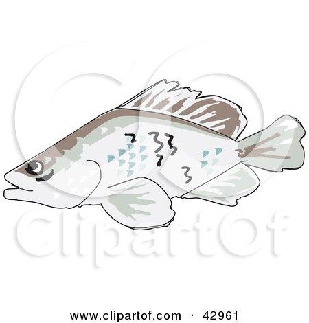 Clipart Illustration of a Swimming Barramundi Fish by Dennis Holmes Designs