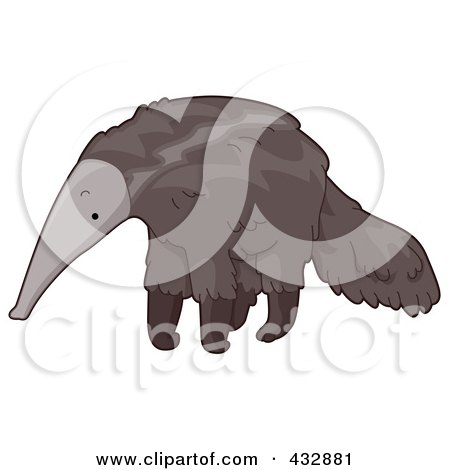 a cute anteater