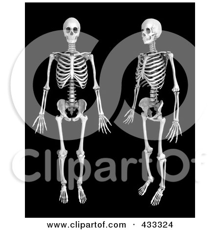 Royalty-Free (RF) Clipart Illustration Of A 3d Human Skeleton Shown In Profile And Front Views by Mopic