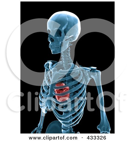Royalty-Free (RF) Clipart Illustration Of A 3d Human Skeleton And Heart Xray by Mopic