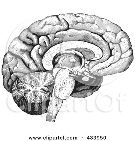 Human Brain Black And White of a Black And White Human