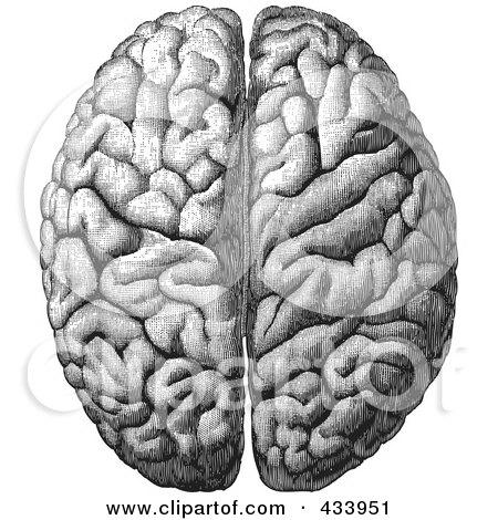 Human brain black and white