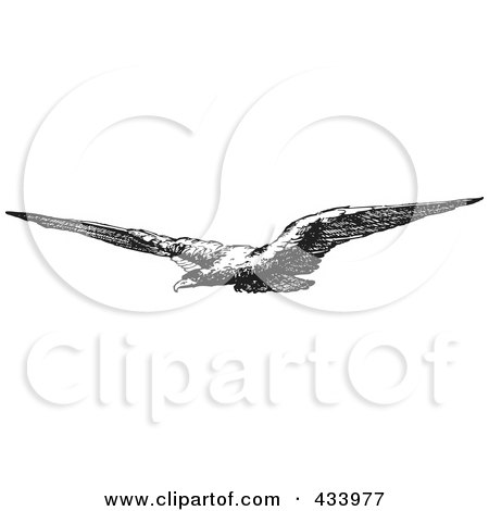 Royalty-Free (RF) Clipart Illustration of a Black And White Sketch Of A Flying Eagle by BestVector
