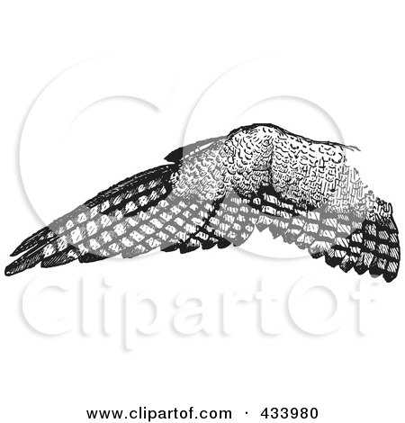 Eagle Open Wings Drawing Sketch of an Eagle Wing