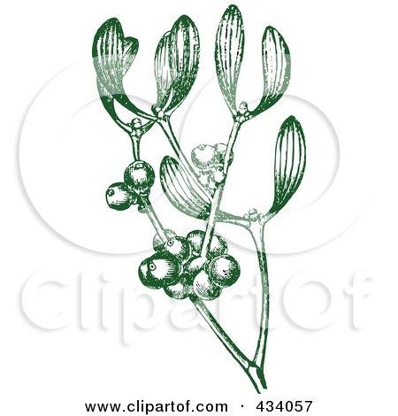 Royalty-Free (RF) Clipart Illustration of a Vintage Green Sketch Of Mistletoe by BestVector