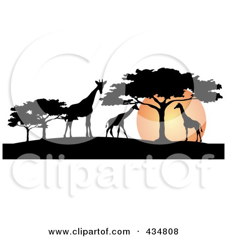 Royalty-Free (RF) Clipart Illustration of a Silhouetted Giraffes And Umbrella Thorn Trees Against An African Sunset by Pams Clipart