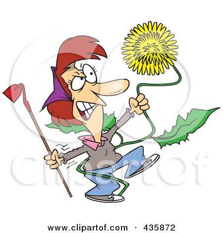 Royalty-Free (RF) Clipart Illustration of an Angry Woman Pulling A Giant Dandelion Weed by toonaday