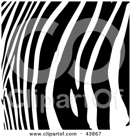 Clipart Illustration of a Background Of Curved Black Zebra Stripes by Arena Creative