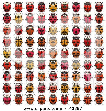 Clipart Illustration of a Rows Of Red And Orange Ladybugs by Arena Creative