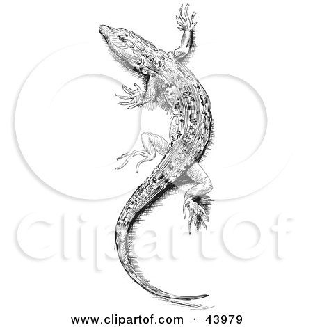 Clipart Illustration of a Black And White Sketched Lizard by Paulo Resende