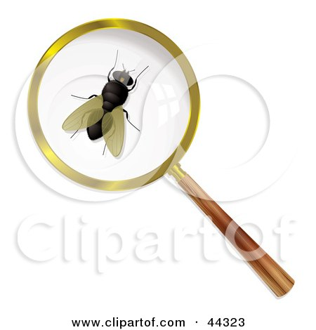 Royalty-free (RF) Clip Art Of A Common Housefly Under A Magnifying Glass by michaeltravers