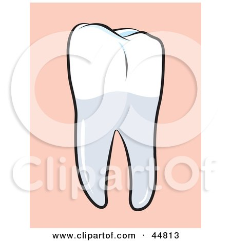 Royalty-free (RF) Clipart Illustration of a Perfect Human Molar Tooth by Lal Perera