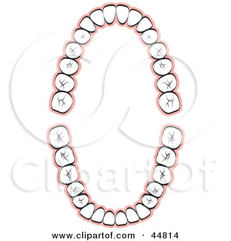 Royalty-free (RF) Clipart Illustration of a Layout of Human Teeth by Lal Perera