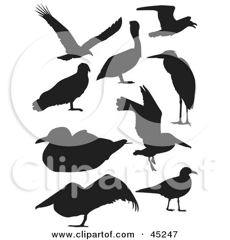 Royalty-free (RF) Clipart Illustration of a Digital Collage Of Profiled Black Bird Silhouettes by JR