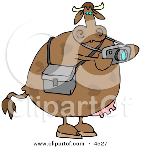 Photographer Cow Taking Photographes with a Digital Camera Clipart by djart