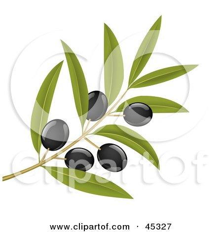 Royalty-free (RF) Clipart Illustration of a Branch Of Organic Black Olives On A Tree by Oligo