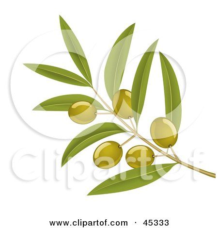 Royalty-free (RF) Clipart Illustration of a Branch Of Organic Green Olives On A Tree by Oligo