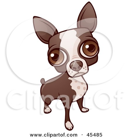 Royalty-Free (RF) Clipart Illustration of a Boston Terrier Dog Looking Up With His Big Eyes by John Schwegel