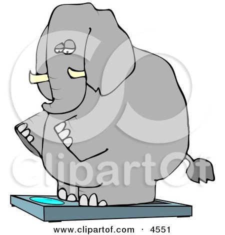 Obese Elephant Standing On a Weight Scale Posters, Art Prints