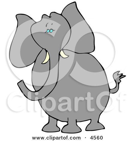 Alert Elephant with Tusks Posters, Art Prints