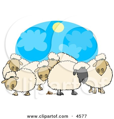 Herd of Black and White Sheep Standing Together Under the Sun Posters, Art Prints