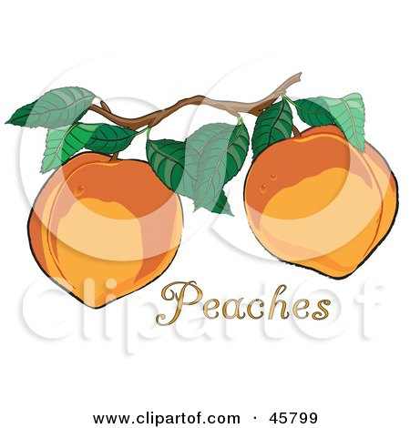 Royalty-free (RF) Clipart Illustration of Two Fresh And Organic Peaches Growing On A Tree In An Orchard by Pams Clipart