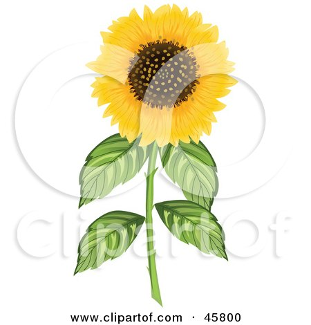 Royalty-free (RF) Clipart Illustration of a Fully Bloomed Yellow Sunflower On A Thick Stem by Pams Clipart