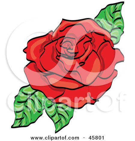 Fully Bloomed Red Rose Blossom With Leaves Posters, Art Prints