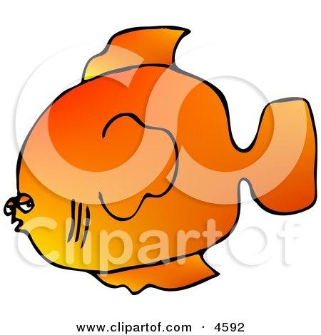 Orange Saltwater Fish Clipart by djart