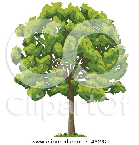 Royalty-Free (RF) Clipart Illustration of a Green And Lush Mature Park Tree by Tonis Pan