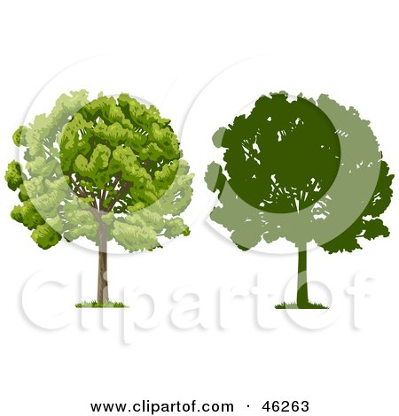 Royalty-Free (RF) Clipart Illustration of a Digital Collage Of Two Park Trees, One In Silhouette by Tonis Pan