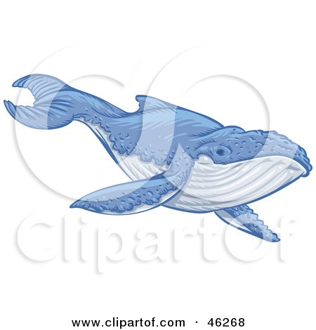Royalty-Free (RF) Whale Clipart, Illustrations, Vector Graphics #4
