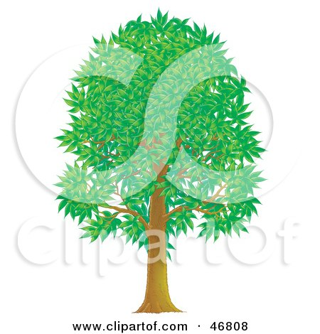 Royalty-Free (RF) Clipart Illustration of a Tall Green Park Tree With Summer Or Spring Foliage by Alex Bannykh