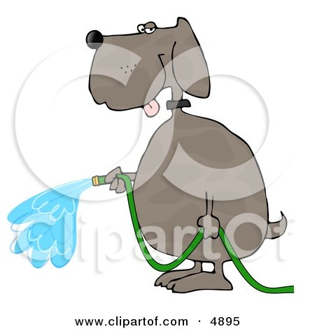 Human-like Dog Watering Outdoor Plants with a Standard Household Garden Hose Clipart by djart
