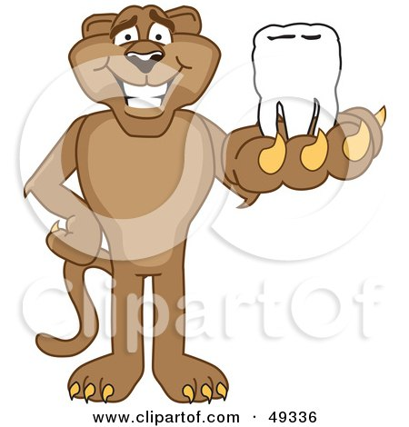 Royalty-Free (RF) Clipart Illustration of a Cougar Mascot Character Holding a Tooth by Toons4Biz