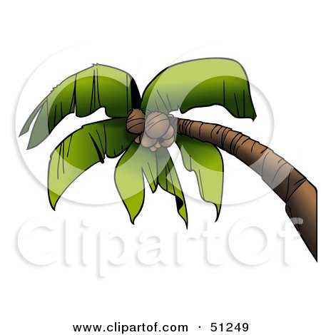 Royalty-Free (RF) Clipart Illustration of a Coconut Palm Tree - Version 1 by dero