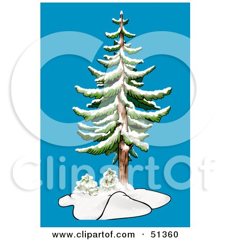 Clipart Illustration of an Evergreen in Winter by dero